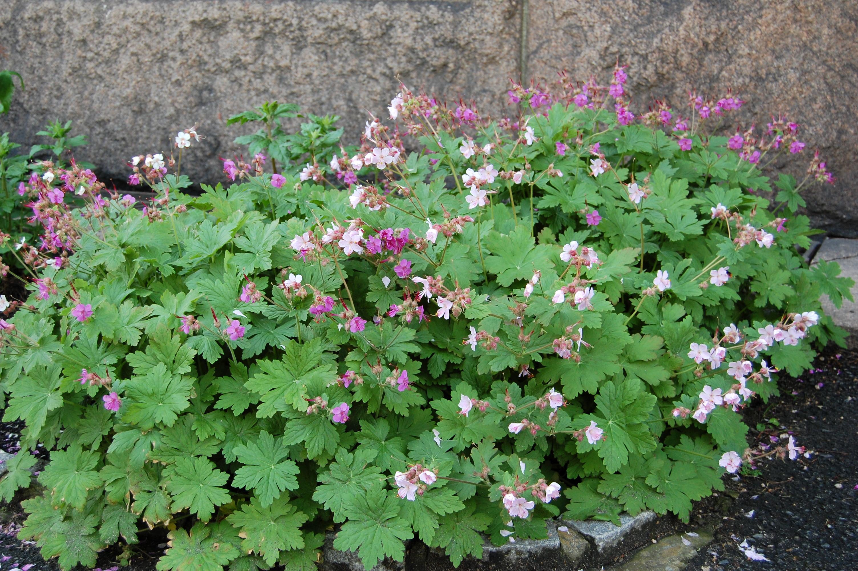Foto: Opplysningkontoret for blomster og planter