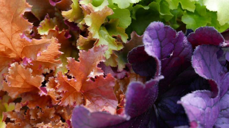 Stauder med vakkert bladverk – fem gode alternativer