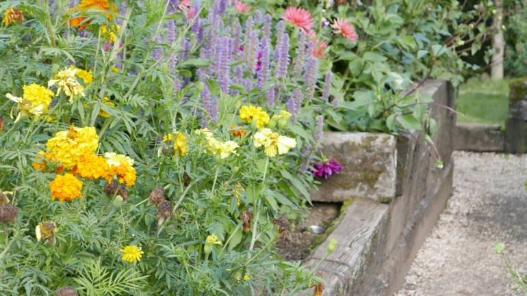 Import av plantemateriale – hva er lov?