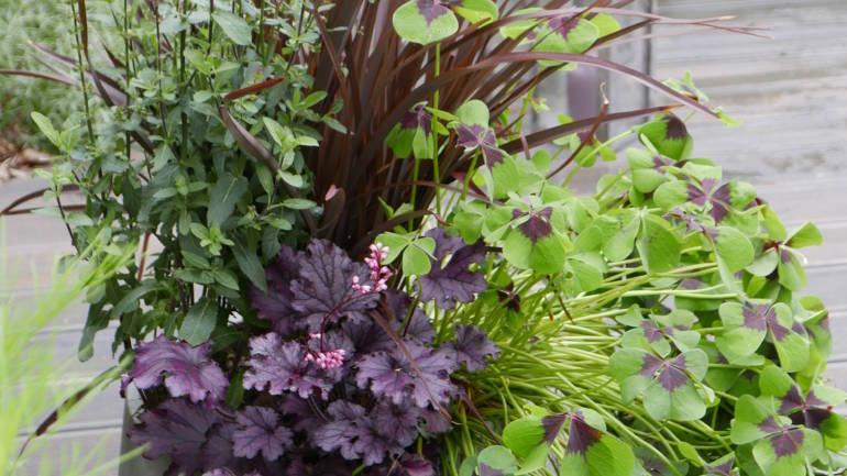 Forvandling av knøttliten hage