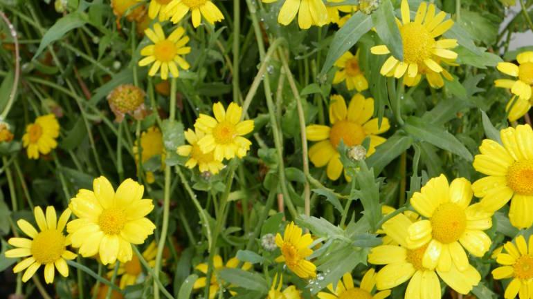 Ringve botaniske hage – itj bare for trønderan