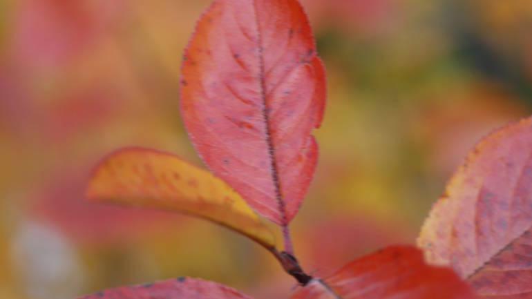 Planlegger du å plante hekk til våren? Ta en titt i høst…