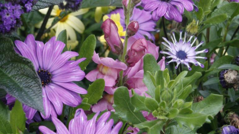 Sommerblomstbed i pastell – bare må ha det!
