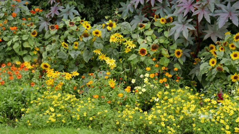 Sommerblomstbed i varme farger