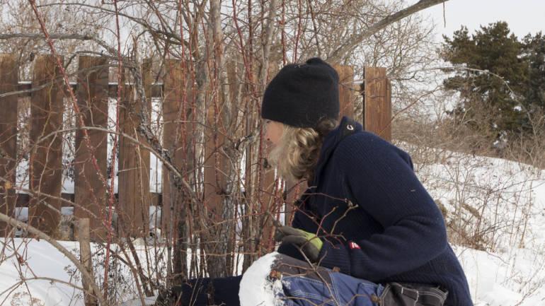 Beskjæring av busker – slik gjør du det