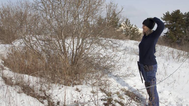 Beskjæring av busker – hva er vitsen?