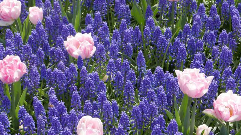 Blomsterløk – de aller vakreste kombinasjonene