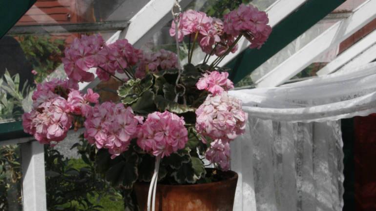 Cottage garden – noe for deg?