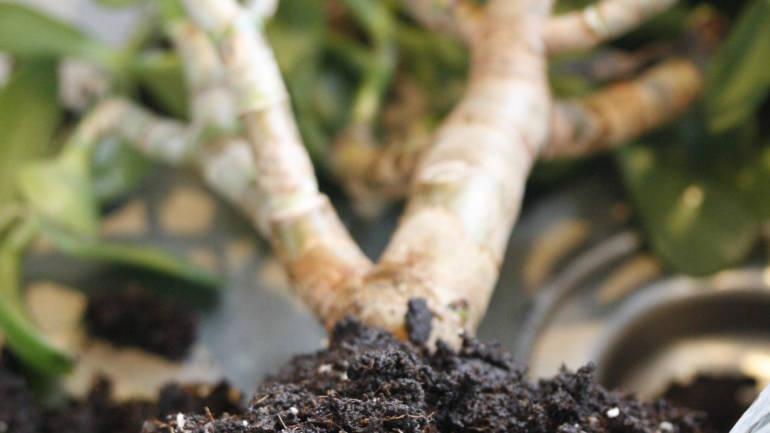 Vårstell av inneplanter!