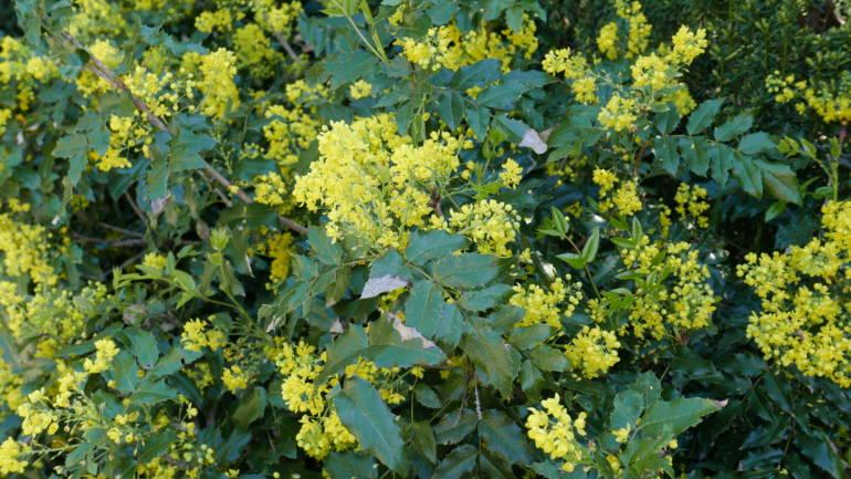 Leirjord – hva planter du der?